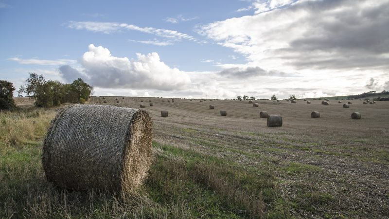 A landscape shot of a rural field with hay bales